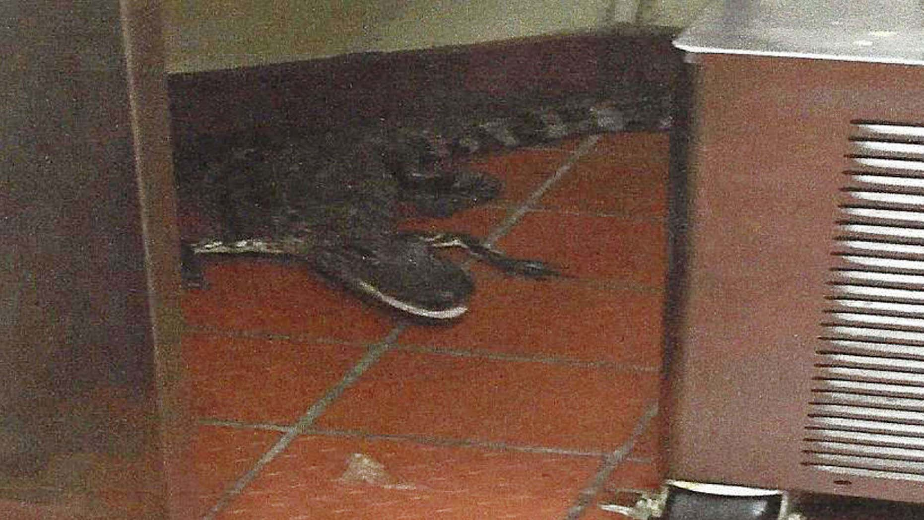 A Florida man throwing an alligator from the car window was caught and arrested.