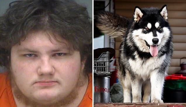 A man from Oldsmar has been accused of having sex with his Siberian Husky dog.