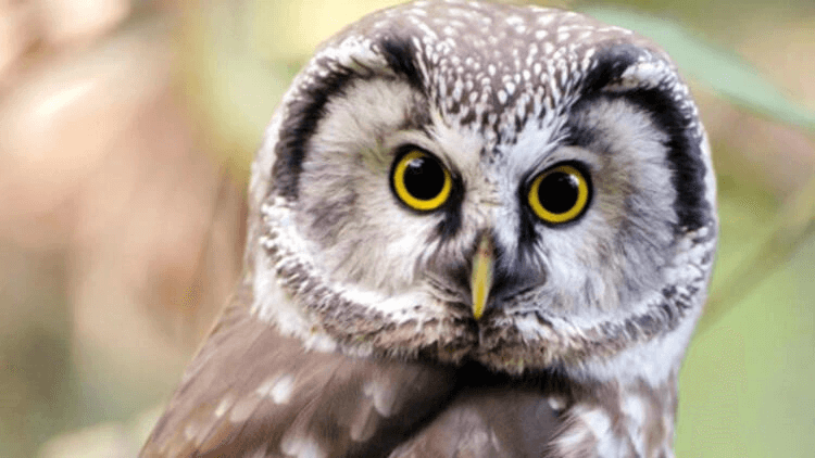 Wildlife authorities reacted to the two men, who were drinking and videotaping, wanderingaround with a wounded owl