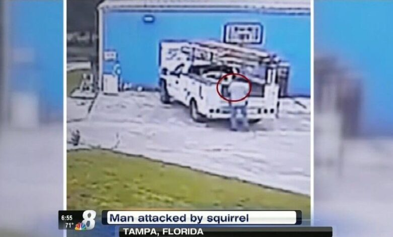 A squirrel attacked a Florida man, forcing residents to stand guard