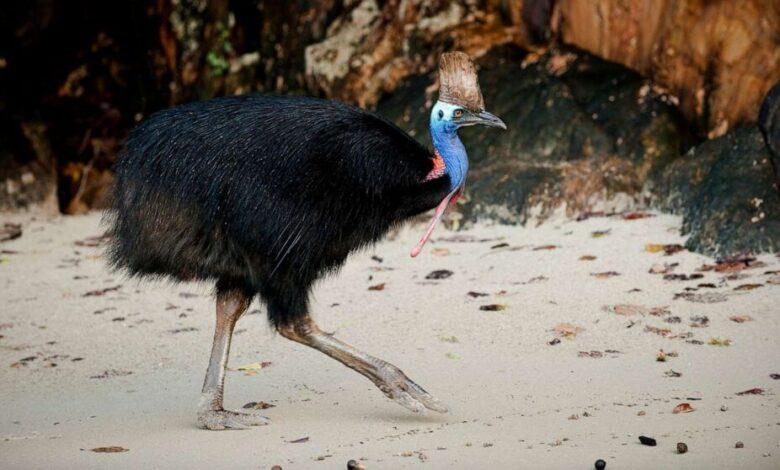 The world's most dangerous bird has killed a Florida man